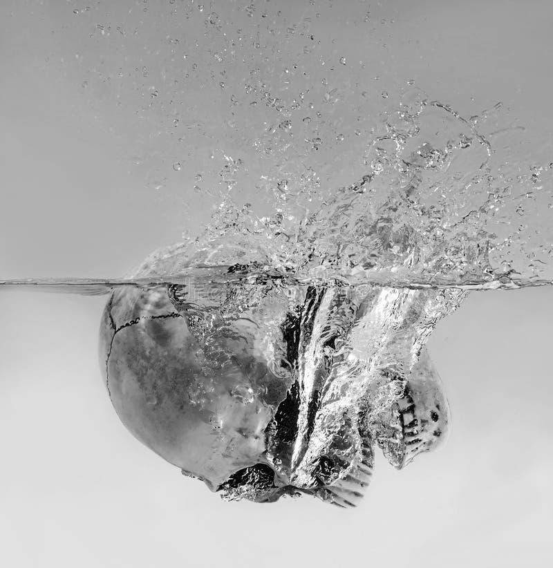 淹没人的头骨在水中 免版税库存照片