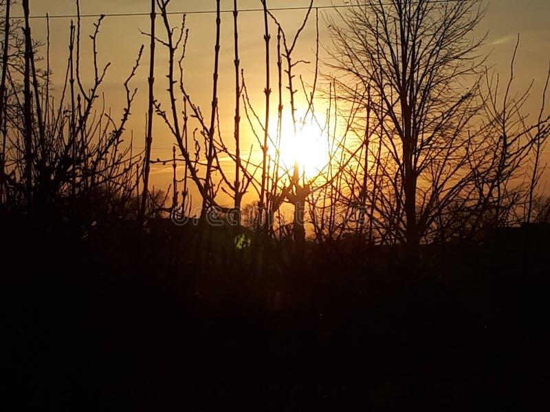 淹没在树分支的美好的日落  免版税库存照片