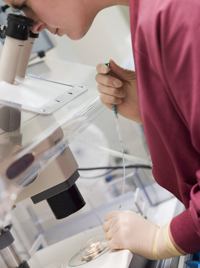 添加蛋胚胎学家精液 库存照片