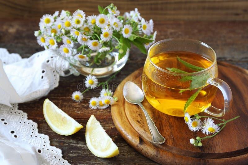 清凉茶用薄菏和春黄菊 免版税库存照片