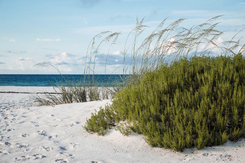 清早佛罗里达海滩和沙丘 图库摄影