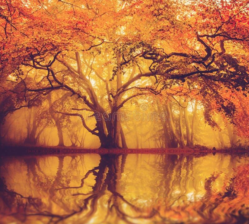 清早有薄雾的秋天森林 免版税图库摄影