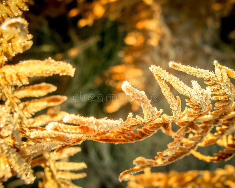 清早露水和霜在叶子,自然冷的秋天日出背景与葡萄酒作用 库存图片