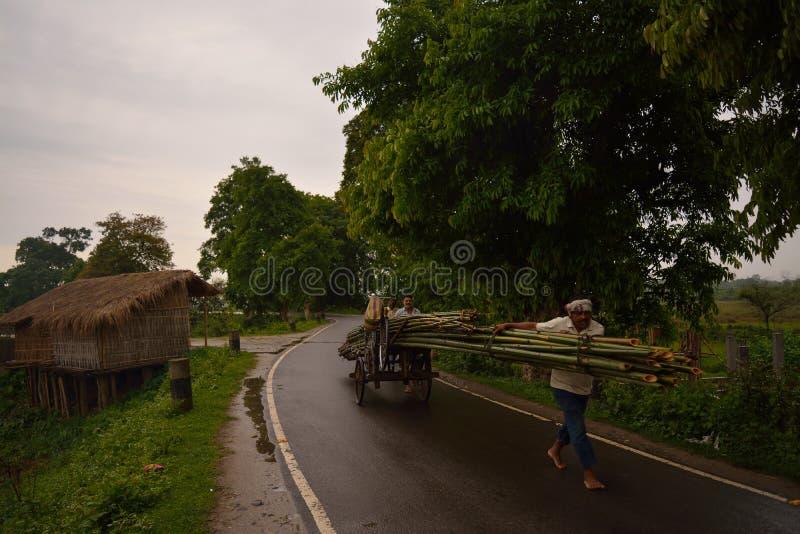 清早#Assam#India 库存照片