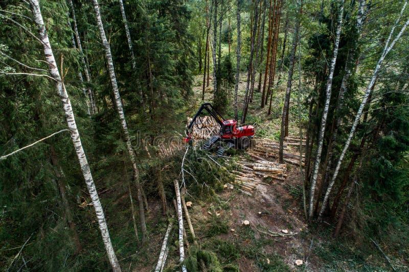 清楚切口收割机在一个北方森林里 库存图片
