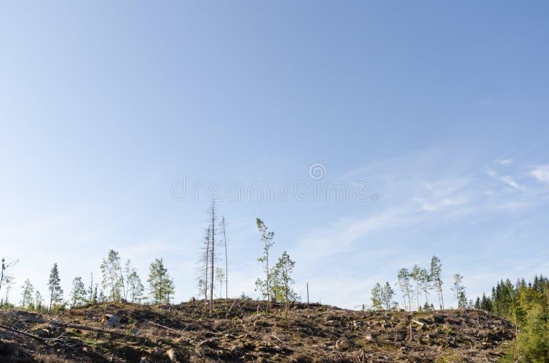 清楚森林区域 免版税库存图片