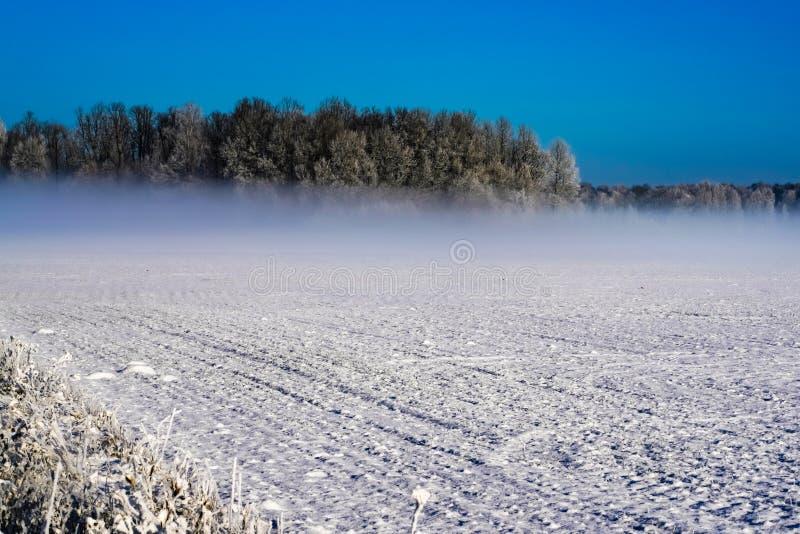 清楚的天空蔚蓝、遥远的森林和雾 库存图片