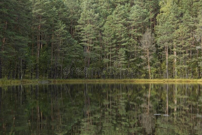 清楚的湖 免版税图库摄影