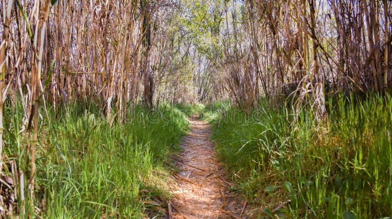 清楚的道路在森林里通过干燥障碍 方式用干燥叶子报道,并且在双方有绿草 r 免版税库存照片