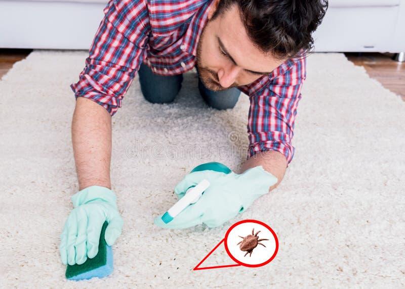 清洗白色地毯地板的手的关闭与海绵 免版税库存图片