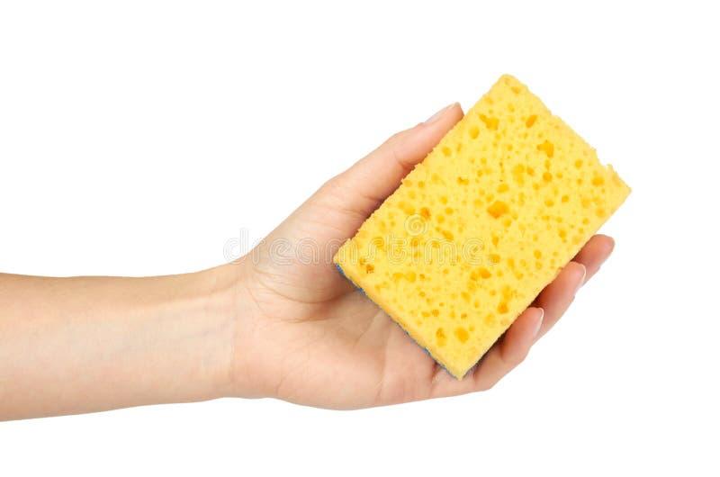 清洗的有益健康的黄色海绵在手中,隔绝在白色背景 免版税库存照片