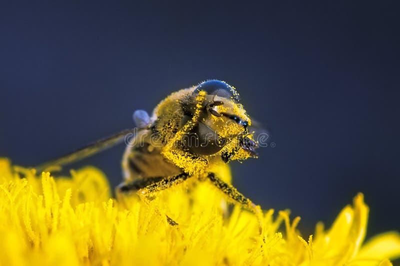 清洗蜂花粉