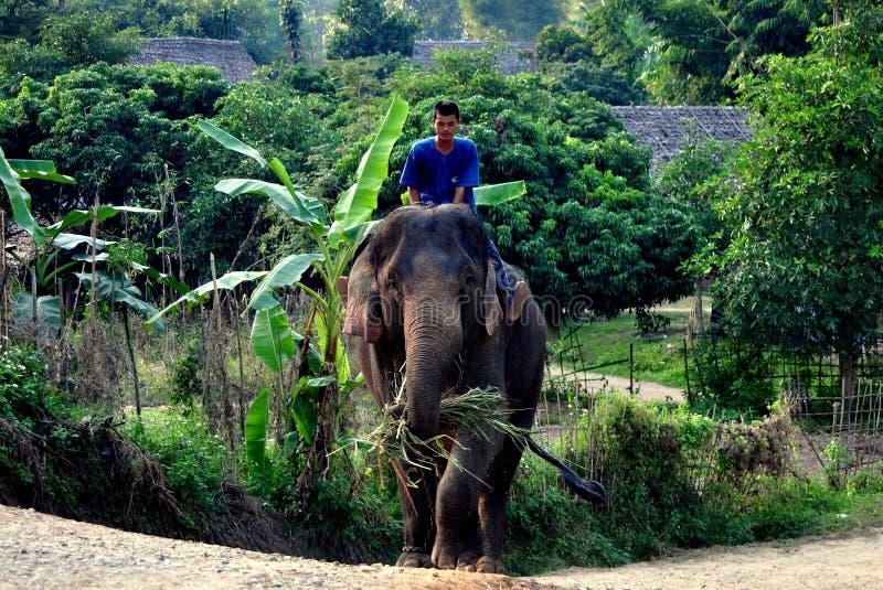 清迈,泰国: Mahout骑马大象 免版税库存照片