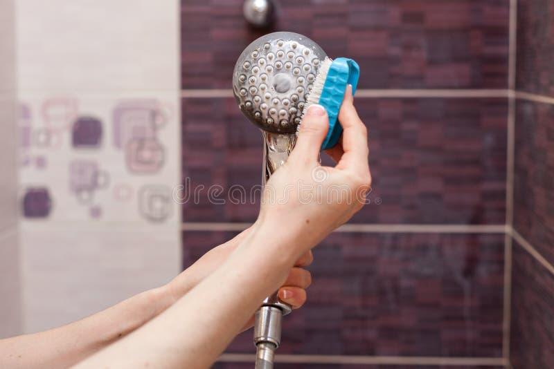 清洗一个钙化的淋浴喷头的妇女在国内卫生间里与小灌木林 免版税库存照片