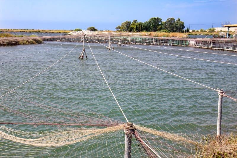 渔场在希腊 免版税图库摄影