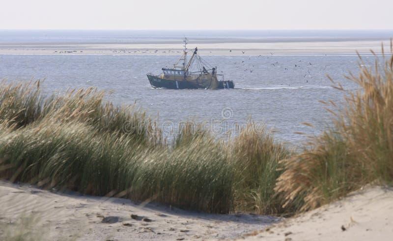 渔场在沃登海,阿默兰岛海岛,荷兰 库存图片