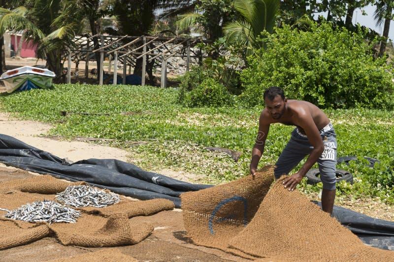 渔夫干燥鱼在阳光下 免版税库存照片