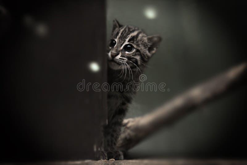 渔猫崽 免版税图库摄影