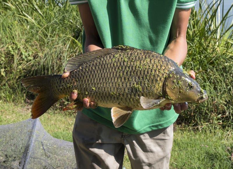 从渔的新近地被抓的鱼 库存图片