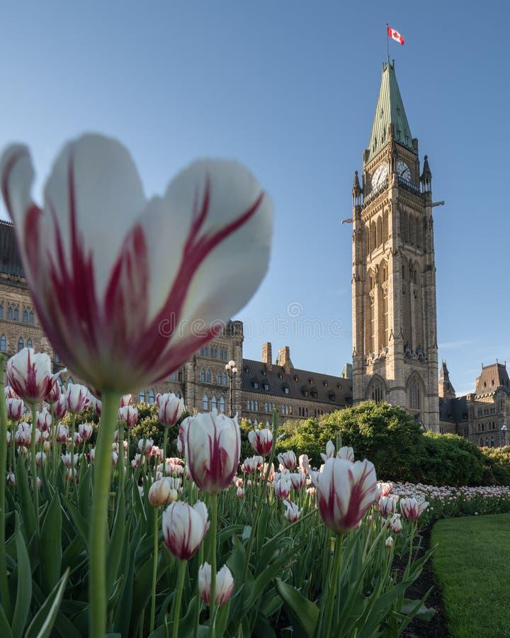 渥太华,加拿大议会小山  免版税库存照片