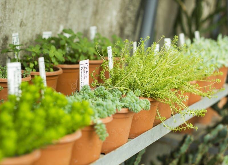 温室内部生长花和植物的 市场待售植物 罐的许多植物 免版税库存图片