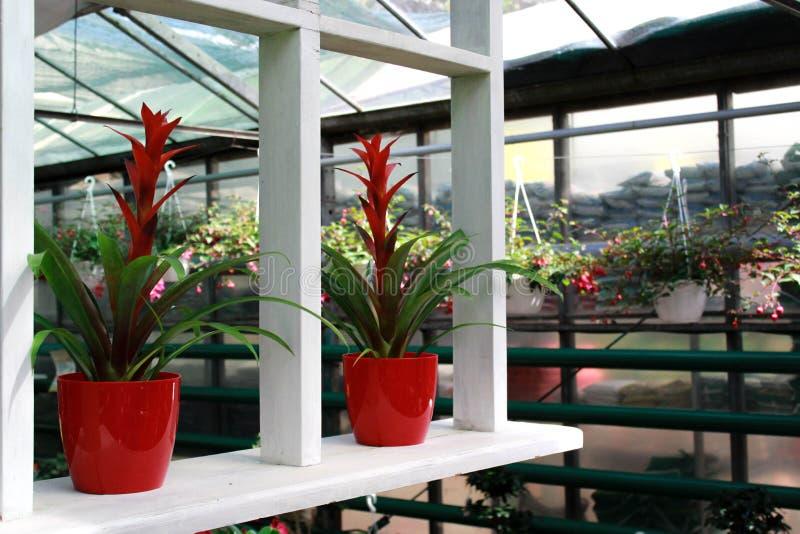 温室植物 库存图片