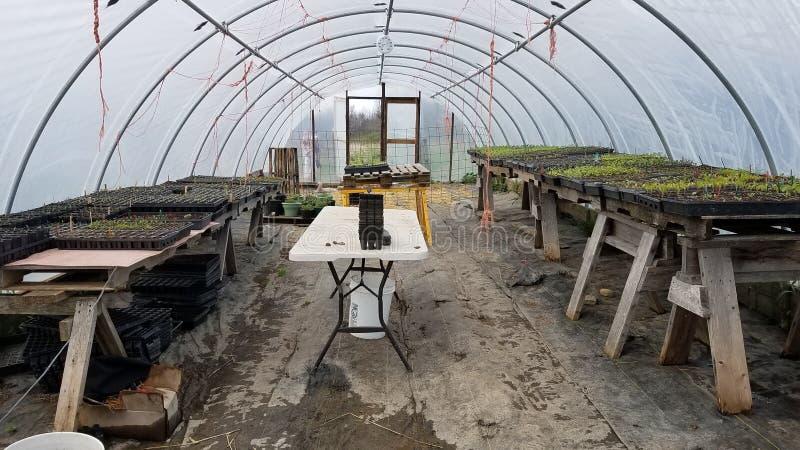 温室种子盘子 免版税图库摄影