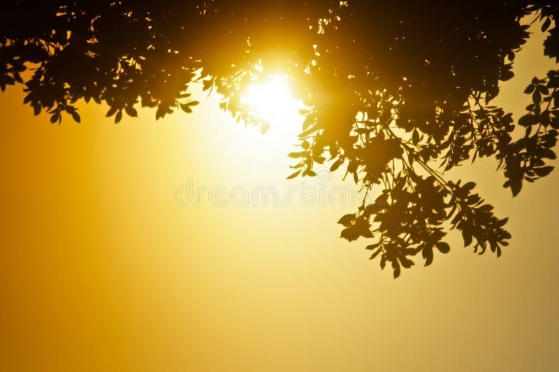 温暖叶子 免版税库存图片