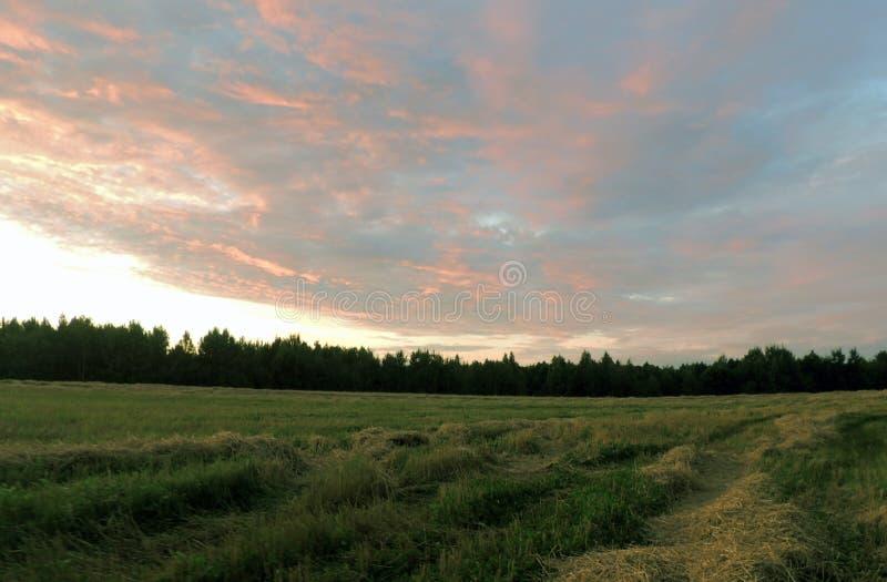 温暖的夏天晚上 在一个压缩的领域的五颜六色的日落 库存照片