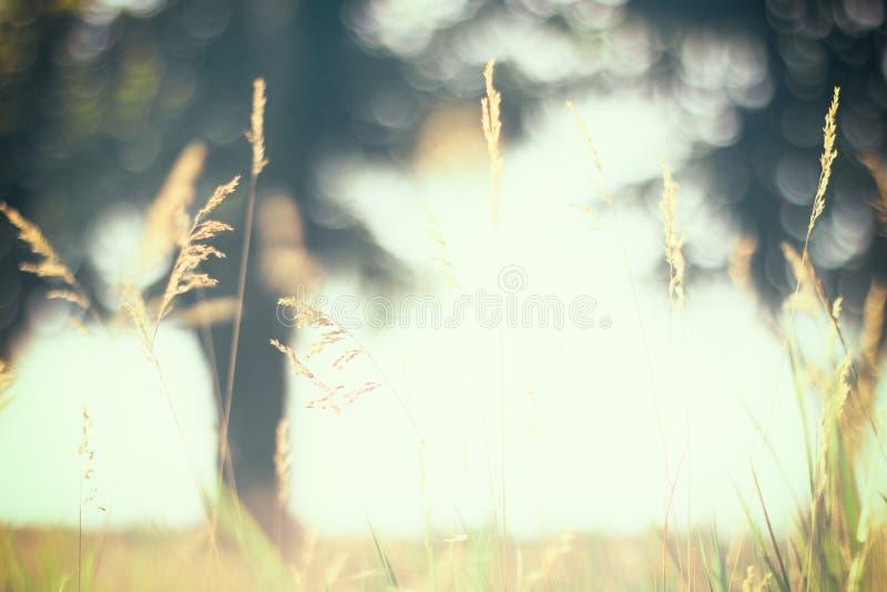 温暖的夏天草甸葡萄酒模糊的照片日落的 免版税库存图片