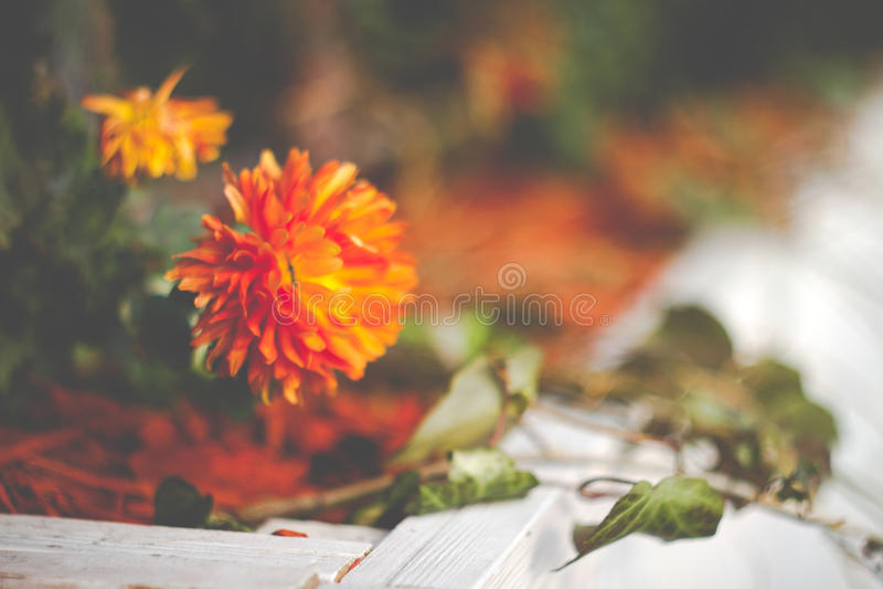 温暖的秋天花 免版税库存图片
