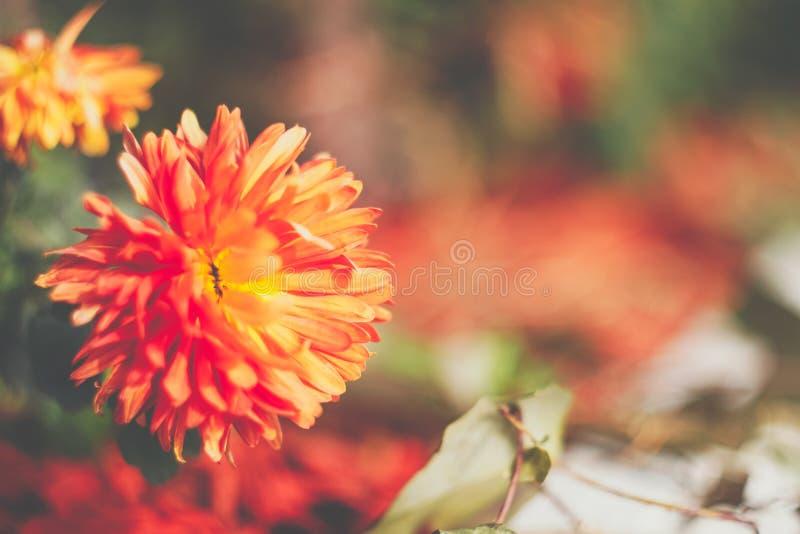 温暖的秋天花 免版税图库摄影