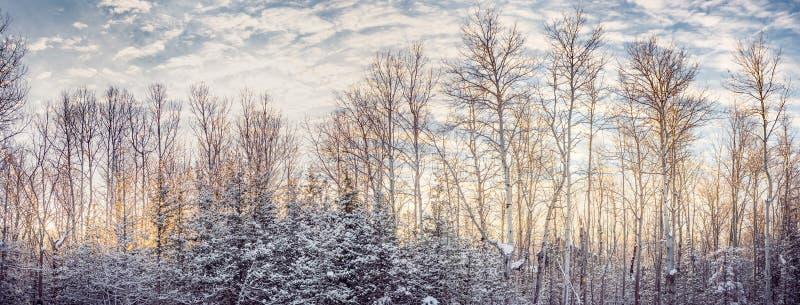 温暖的黎明光在一个多雪的国家早晨 库存照片