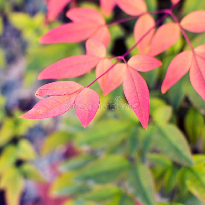 温暖秋天,秋天季节 秋叶,社会netwo的正方形 库存图片