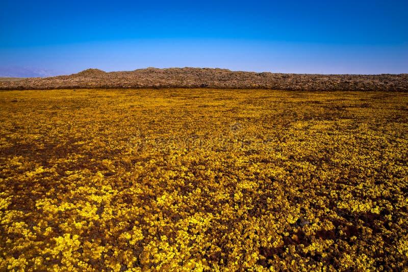 温泉城在Dallol, Danakil沙漠,埃塞俄比亚 库存照片