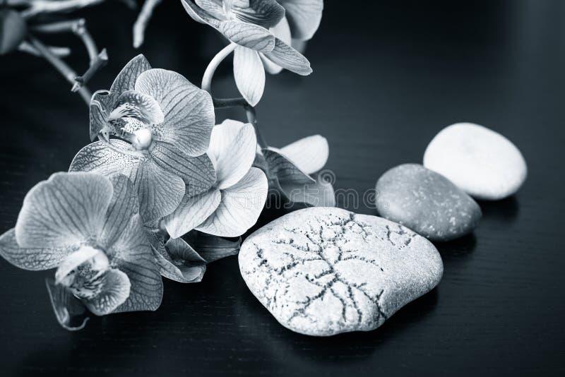 温泉按摩石头和兰花花 图库摄影