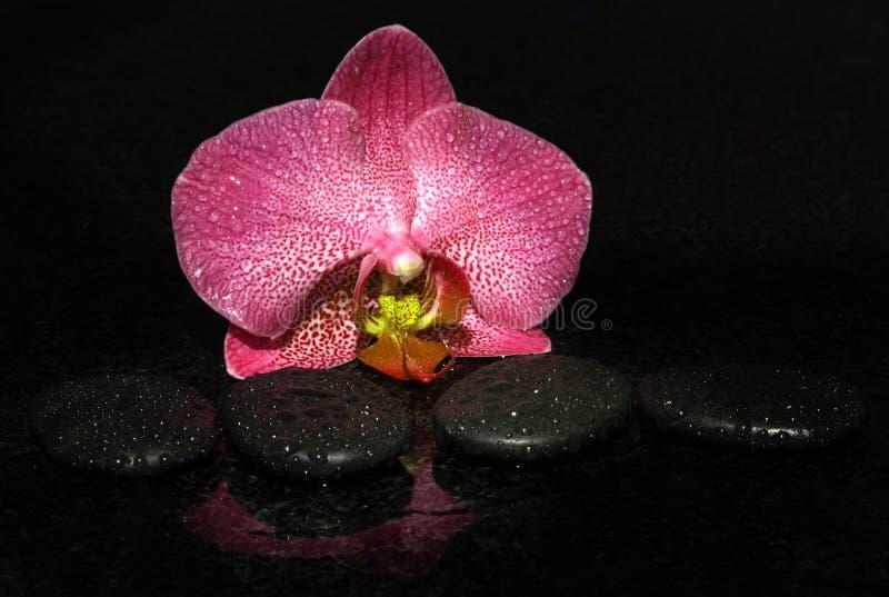 温泉石头和兰花在黑暗的背景与水下落,宏指令 图库摄影