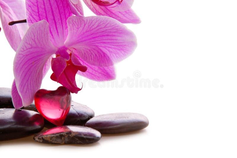 温泉石头和兰花 库存图片