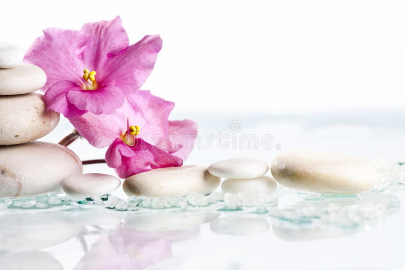温泉石头和桃红色花在白色背景 免版税库存图片