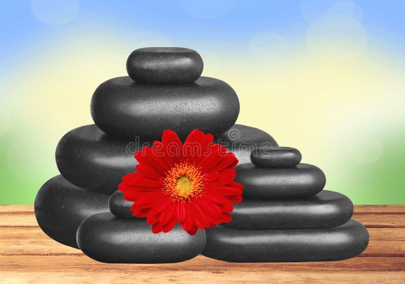 黑温泉石头和红色大丁草在nat的木桌上开花 库存照片