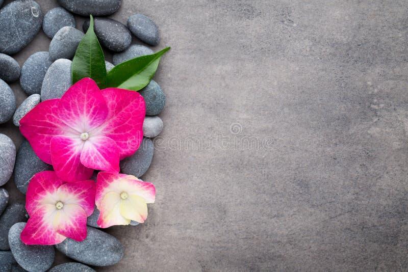 温泉石头和花,在灰色背景 库存照片