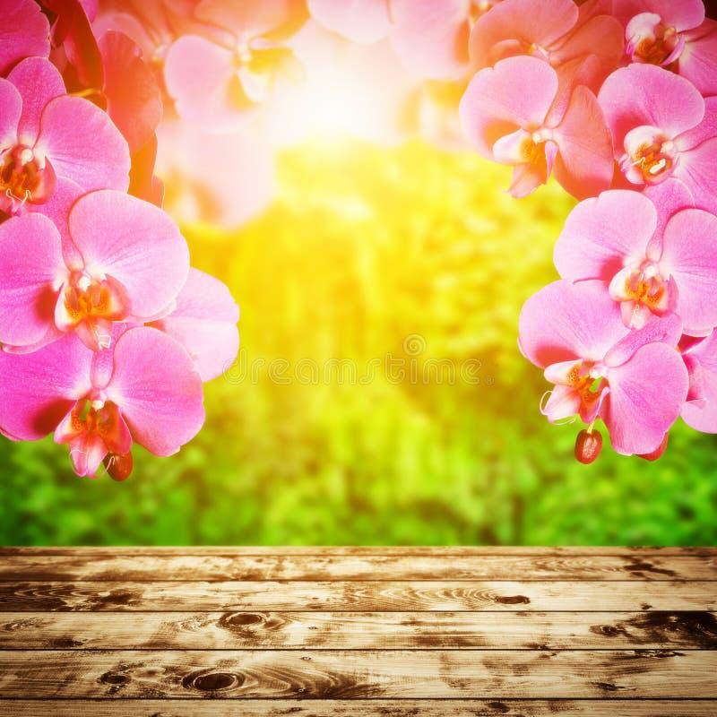 温泉,禅宗,健康构成。兰花花 图库摄影