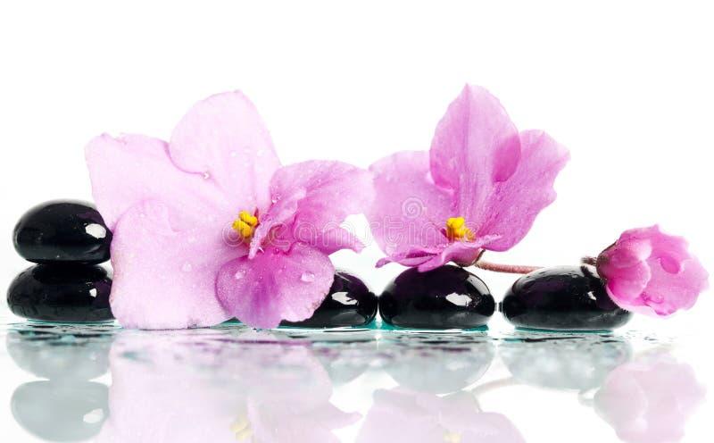 温泉治疗按摩石头和桃红色花 免版税库存照片
