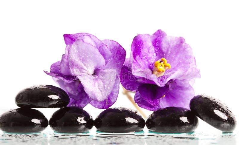 温泉治疗按摩石头和紫罗兰色花 免版税库存照片