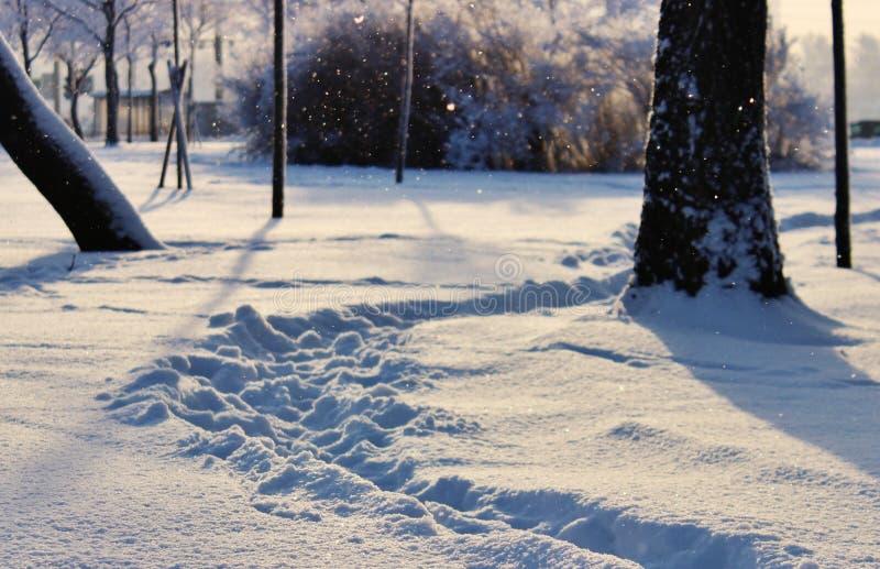 温特帕克,冬天风景 免版税库存照片