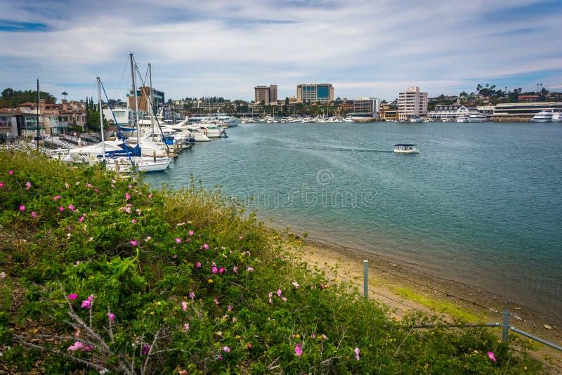 港口的花和看法,看从Lido小岛 免版税图库摄影