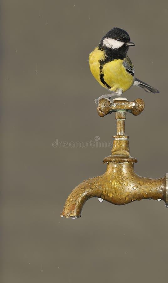 渴。 免版税库存照片