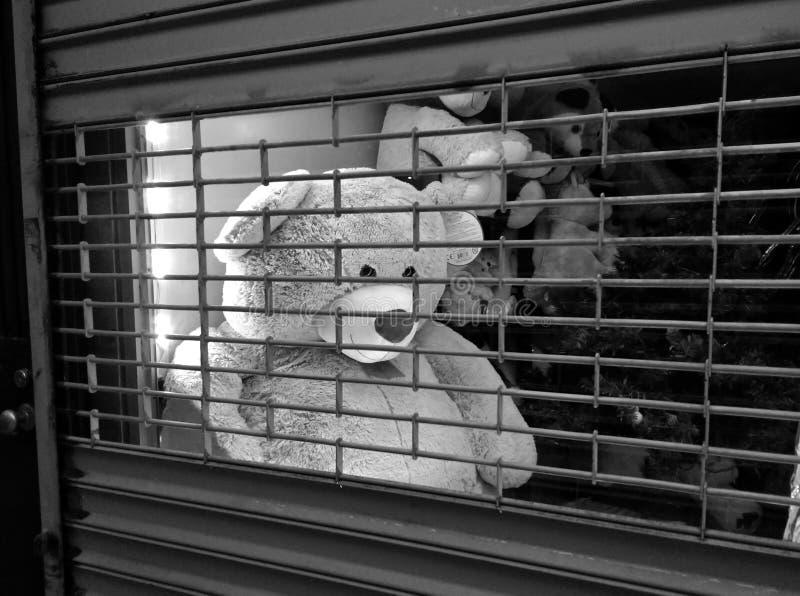 渴望解放从后面一个装门的商店窗口的玩具熊 免版税库存图片