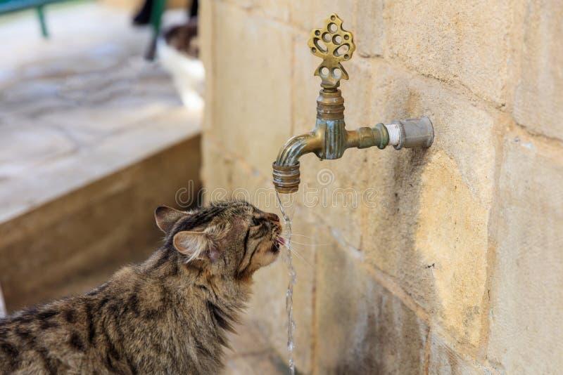 渴猫是从龙头的饮用水 被弄脏的背景 关闭视图 免版税库存照片
