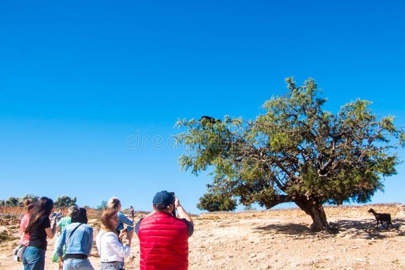 游人在一次旅途上通过摩洛哥 库存图片